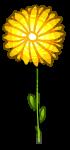 Fleur-Jaune.png