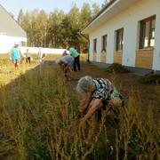 Porz-dkowanie-ogrodu-27-sierpnia-2019-10