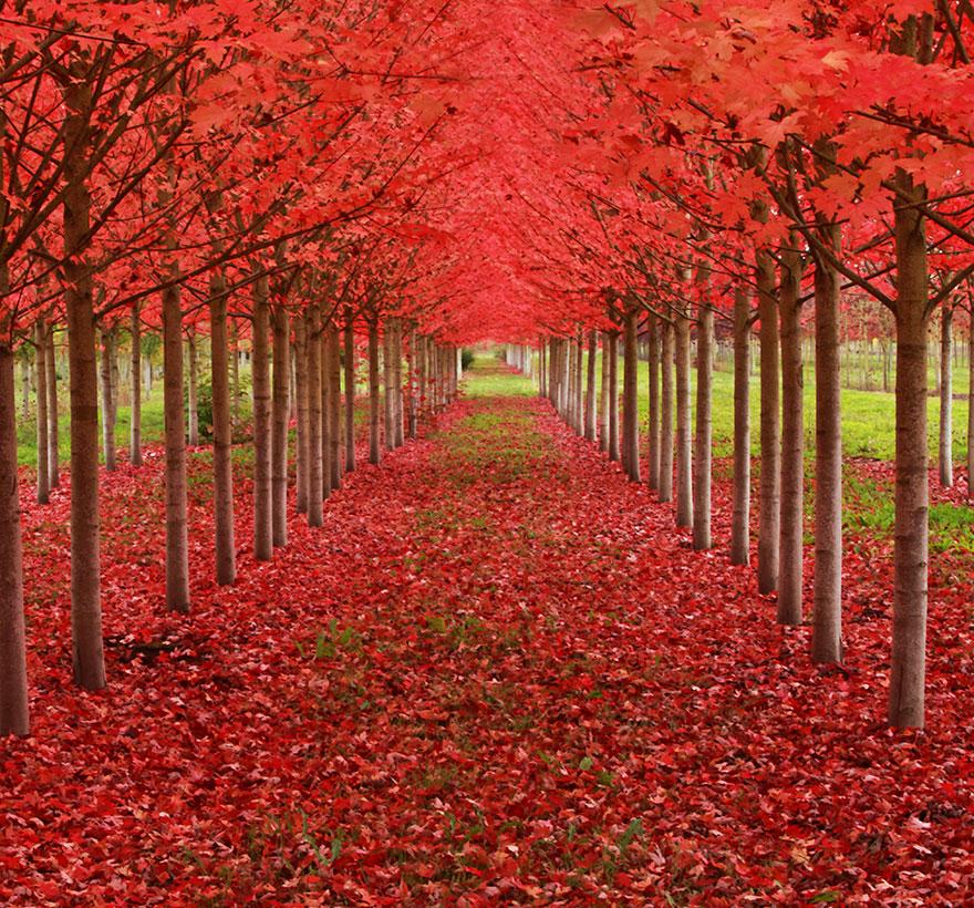 Кленовая аллея в штате Орегон, США-4