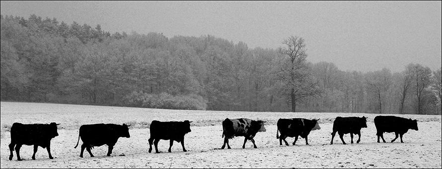 Фотограф Владимир Ролов  74