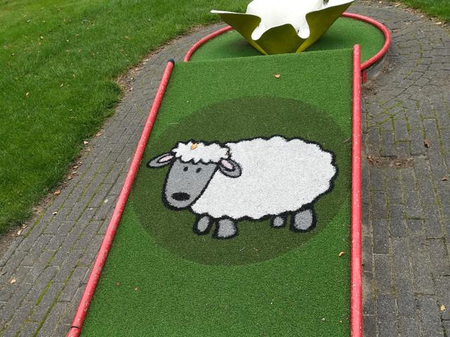 Sheep-golf2.jpg