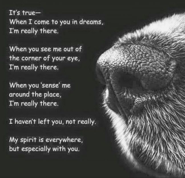 pin-by-lori-baur-on-sympathy-loss-of-pet-pinterest-dog-death-quotes