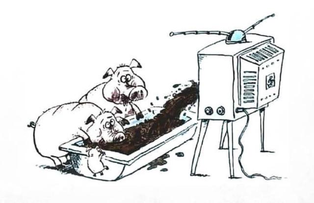 tv-schweine