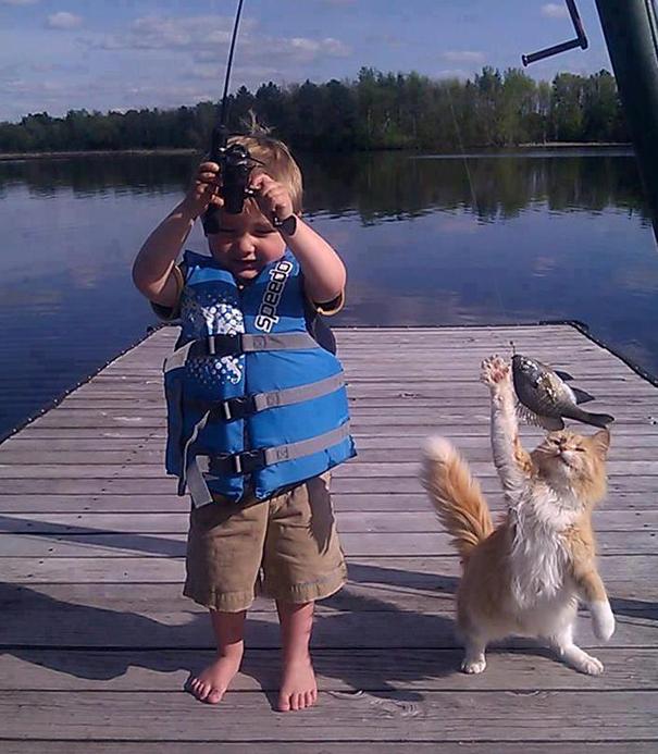 Коты, которых поймали на горячем - 45 отчаянных фотографий - 4