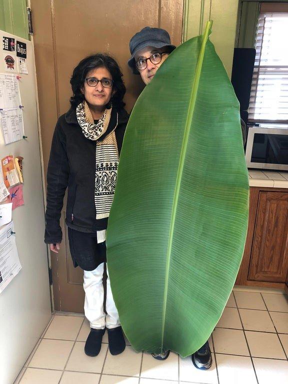 Лист бананового дерева