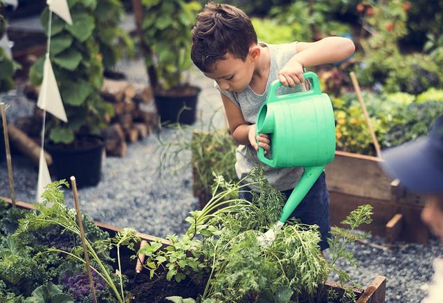Tricks to Make a Narrow Garden Feel Fun