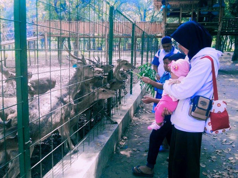 maliran deer feeding