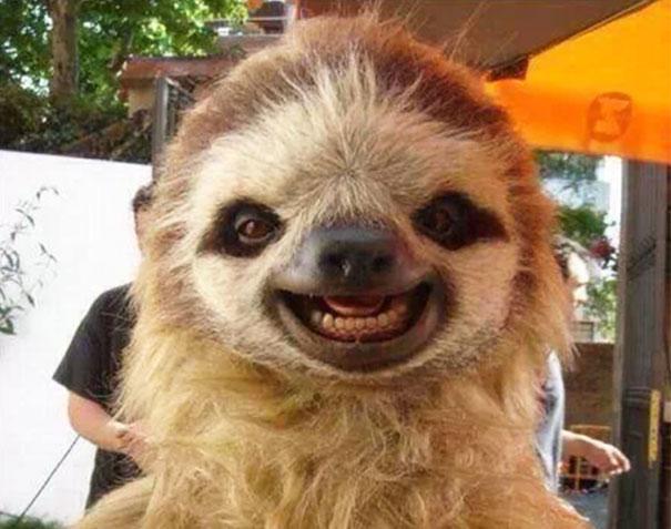 30 фотографий самых счастливых животных на планете-25