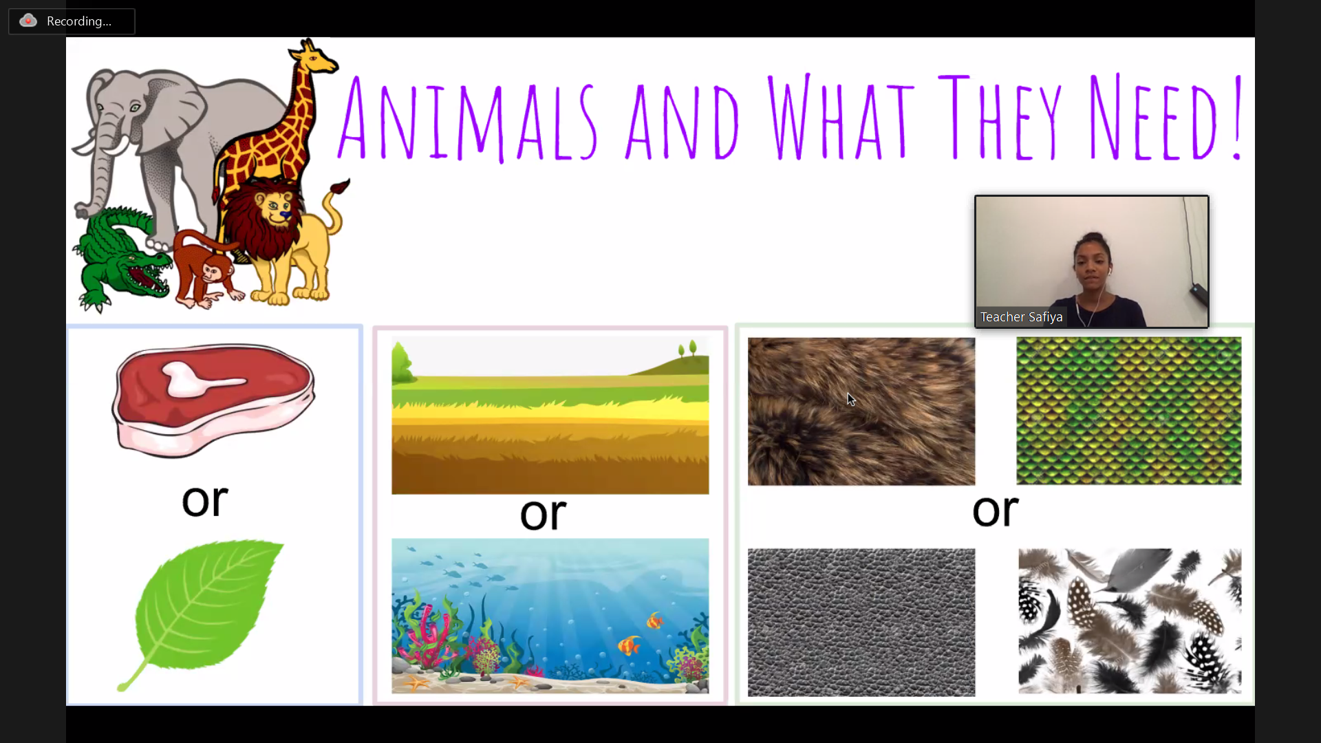 Enrichment: Animals and what they need