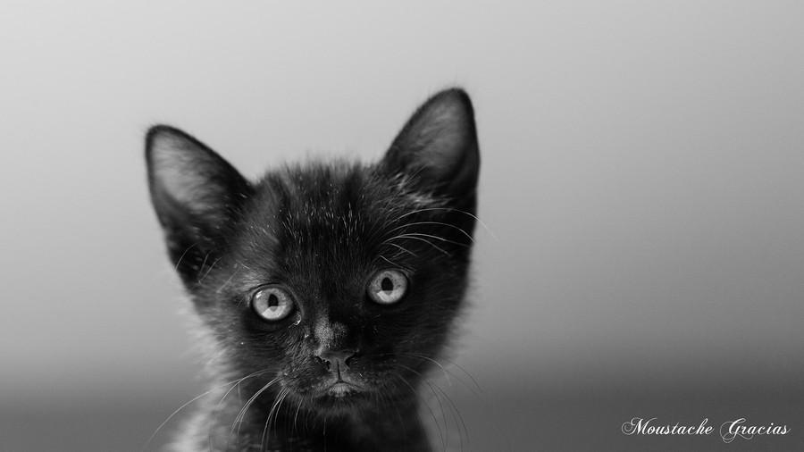 Разносчицы удачи - загадочные чёрные кошки 45 фотографий