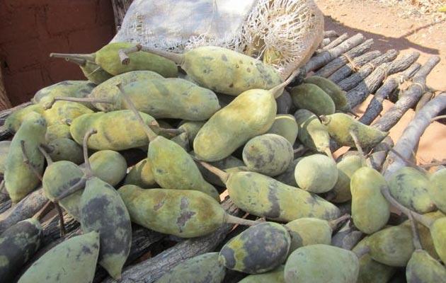 Voce-Baobaba