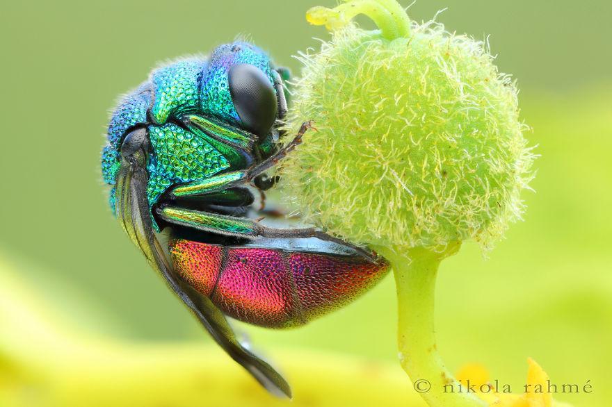 Природа - лучший художник: 40 животных неожиданной расцветки - 33