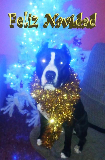 Feliz Navidad Rocco