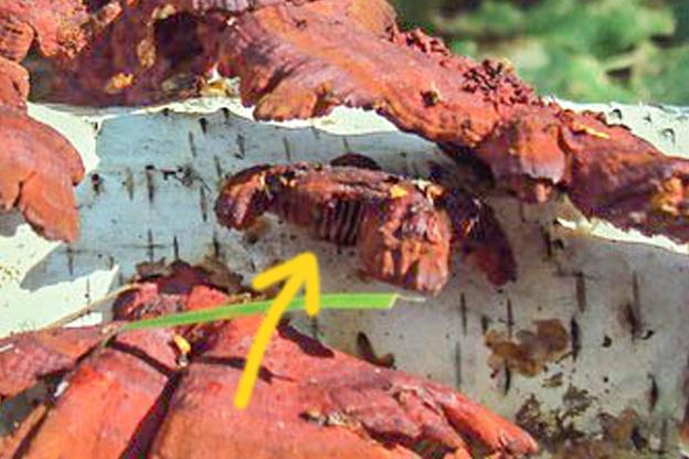 i.ibb.co/7WPR6wb/fungi-01.jpg