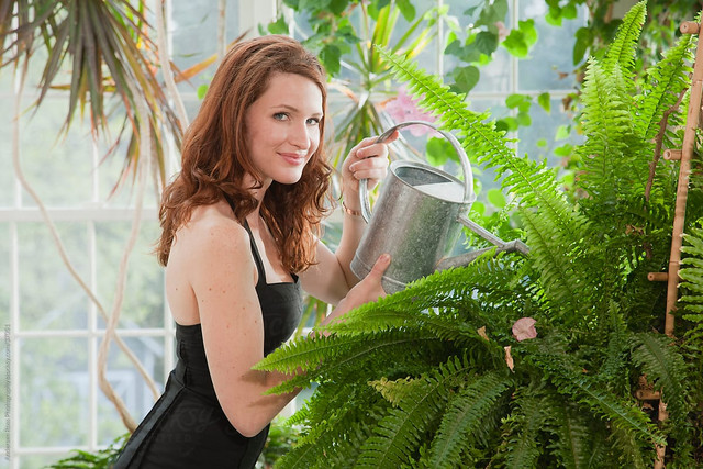 4 Proper Methods for Watering Home Plants
