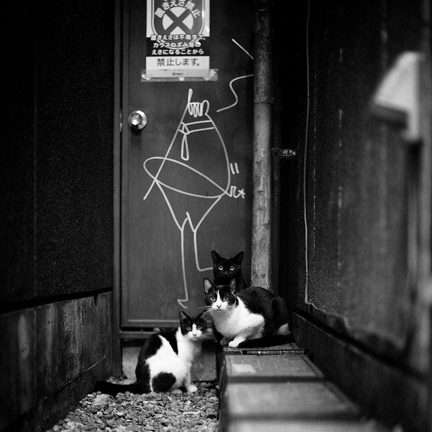 Таинственная кошачья жизнь в чёрно-белых фотографиях-14