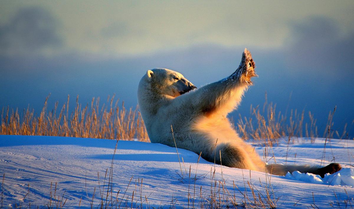 Уморительные финалисты конкурса Comedy Wildlife Photography Awards 2018 13