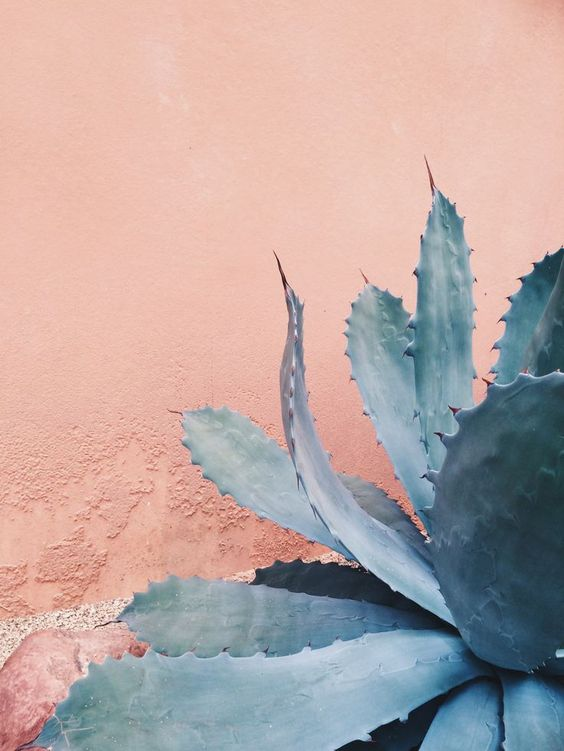 Succulent plant against pink background