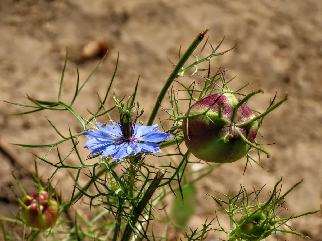 Засентябрило. По старому стилю ещё лето, осень начнётся 14 августа)38 фото 35712429