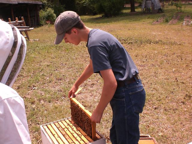 caleb-working-bees