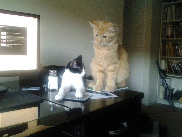 Both_cats_024