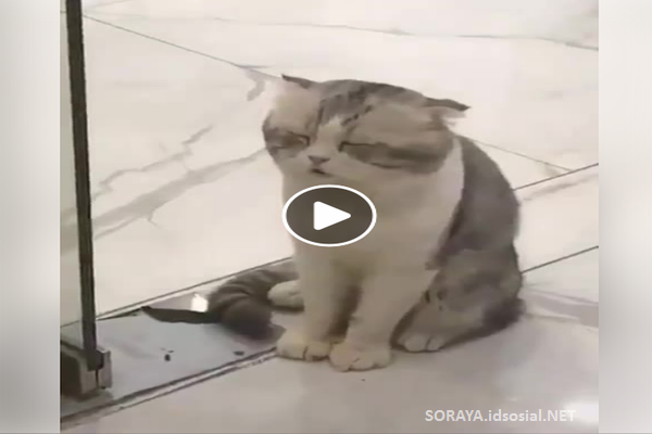 foto kucing malas lucu di hari senin