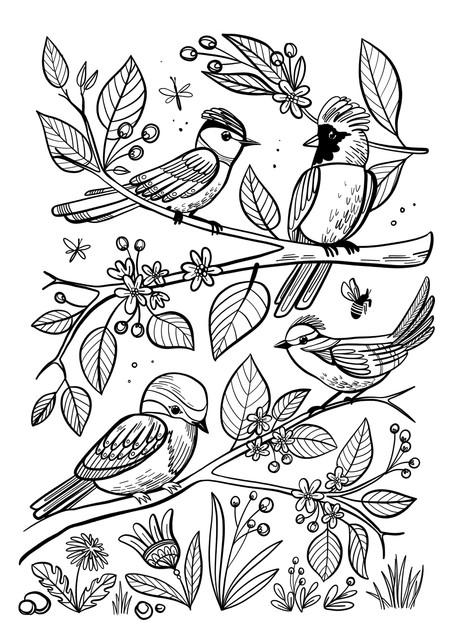 omalovanka-ptacci