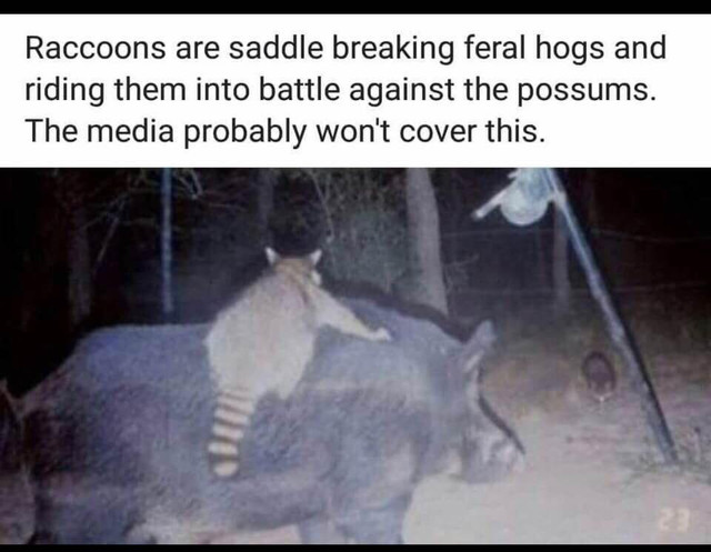 coon-rodeo