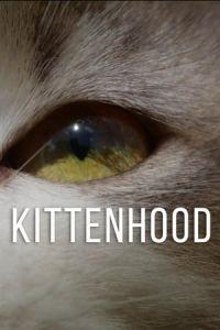 Kittenhood 2015