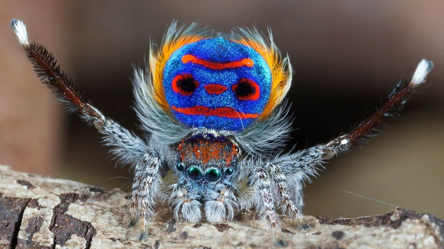 Природа - лучший художник: 40 животных неожиданной расцветки - 34