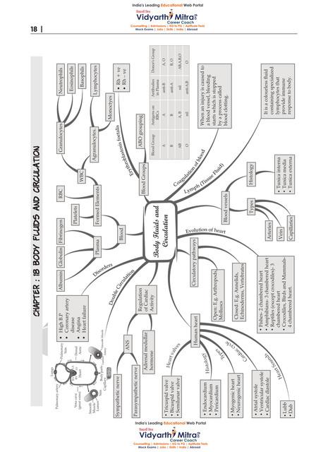 11th-Bio-Mindmaps-19