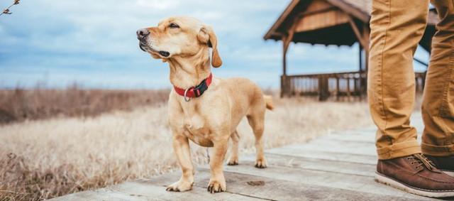dog-boardwalk-1024x453