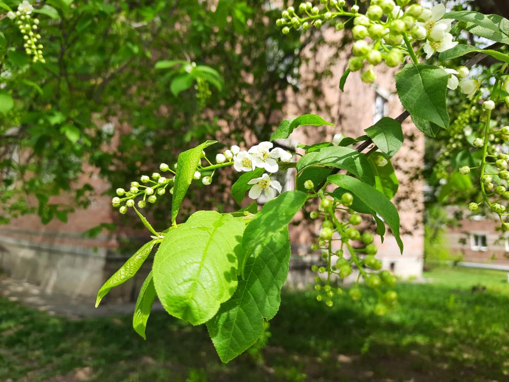Bloom-1.png