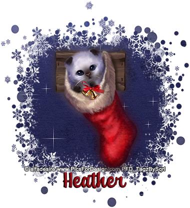 Heather-Stocking-Cat-4-tbs
