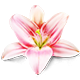 https://i.ibb.co/871YX6k/lily-icon.png