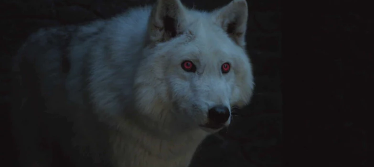 o-que-aconteceu-com-os-lobos-game-of-thrones