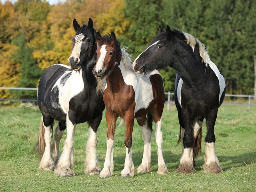 Incorporating Magnetic Therapy To Improve A Horses Wellbeing