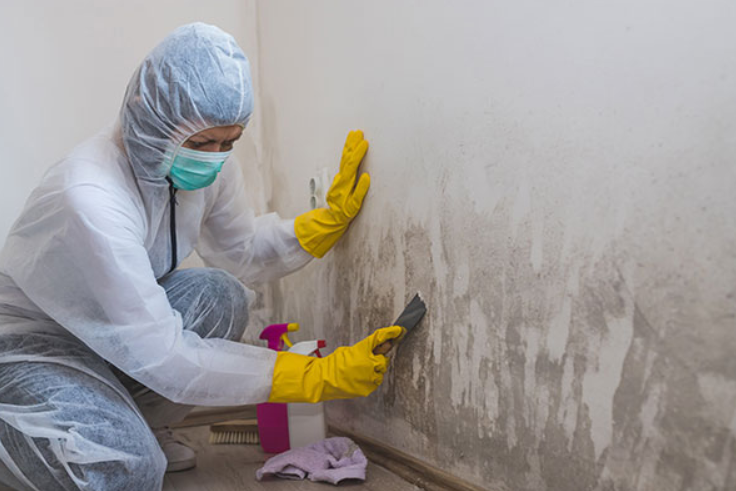 Why You Should Consider Mould Removal Services