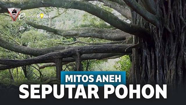 Inilah 5 Mitos Aneh Seputar Pohon yang Diyakini Orang-Orang!