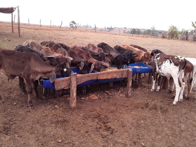 Produtora alavanca a produção de leite em Pratápolis - SENAR MINAS