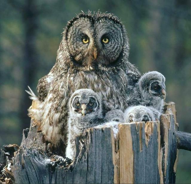 owls sweet3