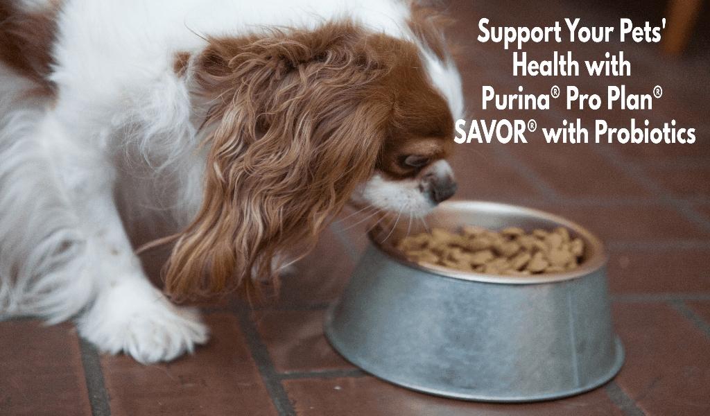 Health Make Happy Pets