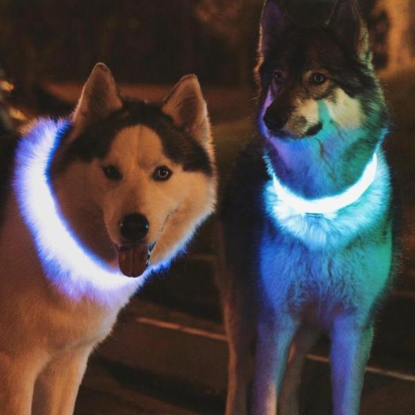 dog-collar-1