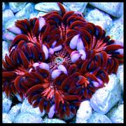 [Image: Red-Orange-and-Blue-Rock.jpg]