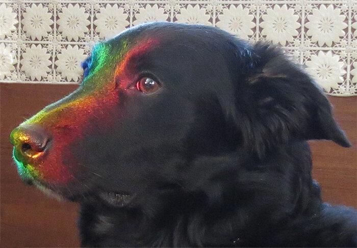 Радужный Кай