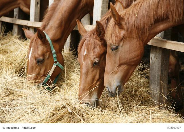 Essen Sand und andere seltsame Essverhalten bei Pferden