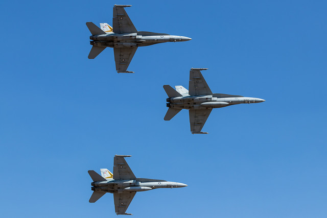 group-of-hornets