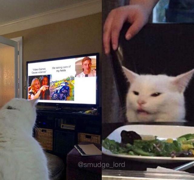 Gato-meme