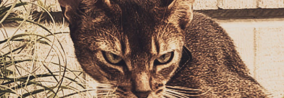 https://i.ibb.co/98DrP3d/kitty-in-the-big-city-69045068-188276148846755-584764398354747115-n.jpg