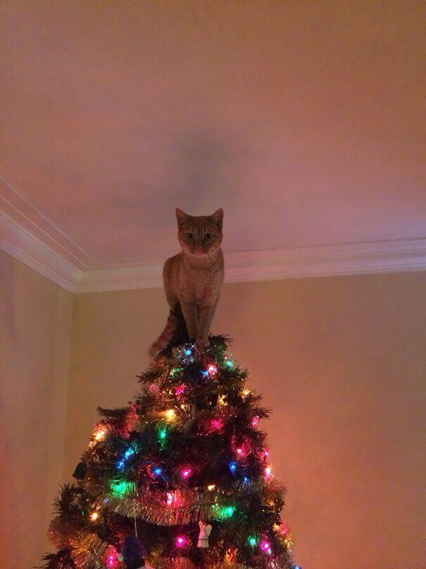 聖誕樹長貓系列,不會長出貓咪的聖誕樹不是一棵好聖誕樹 3